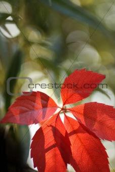 Beautiful autumnal leaves