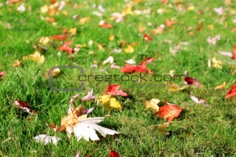 Autumnal leaves on the grass