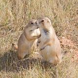 prairie dog secrets