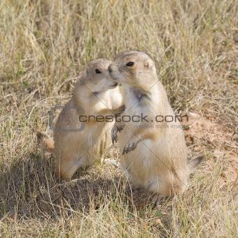 prairie dog secrets