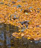 Autumn forest with small brook and orange foliage