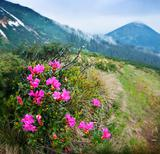 Blossom shrub and mountain landscape