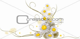 chamomile composition