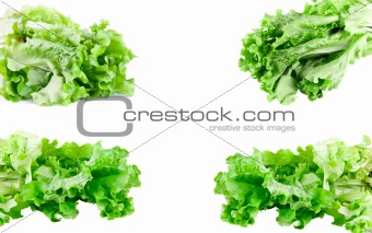 green lettuce set