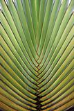 Close up of big palm tree leaf