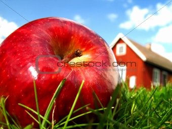 Apple in garden 2
