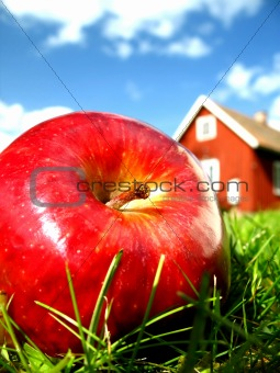 Apple in garden 1