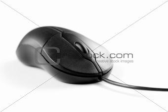 Black mouse on white background
