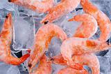Frozen shrimp with ice on black