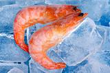 Frozen shrimp on blue