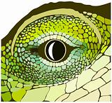 Eye of a reptile.