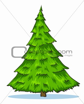 Green natural christmas tree illustration