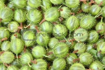 Background of gooseberry