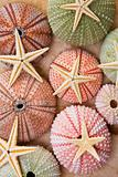 Sea Urchins and Starfish