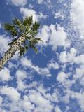 Palm Tree and Cloudy Sky