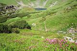 Rhododendron flowers and mountain lake