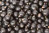 Wet black currants