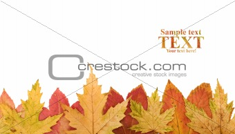Autumn leaves footer