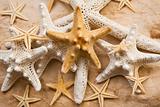 Starfish Abundance
