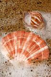 Sand and Sea Shell