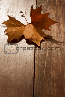 Autumn Leaf on a park bench