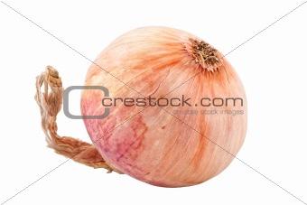 single onion