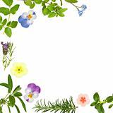 Flower and Herb Leaf Border