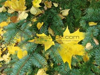 autumnal decoration