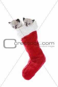 Kittens In A Sock