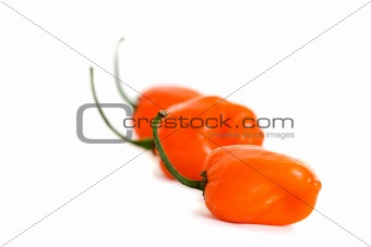Three Habanero Peppers