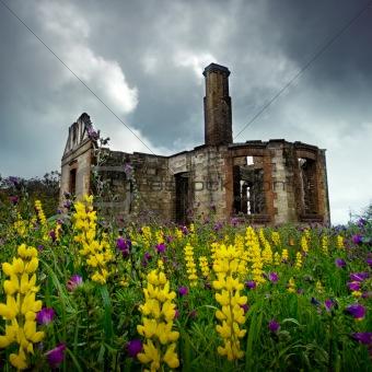 Floral Ruins