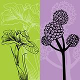 Iris and Flower