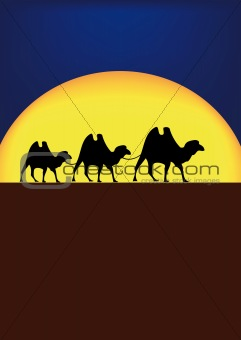 camels in night