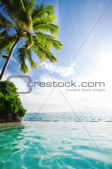 Palm tree hanging over infinity pool