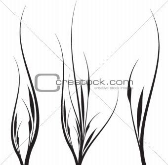 Aavy Grass