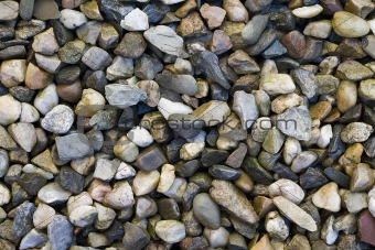 abstract background - a layer of wet small stones of different colors