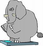 Elephant On Scales