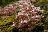 mountain_flower01.jpg