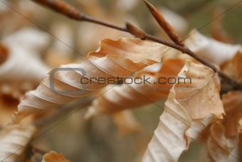 Autumn foliage / background