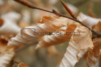 Autumn foliage / background