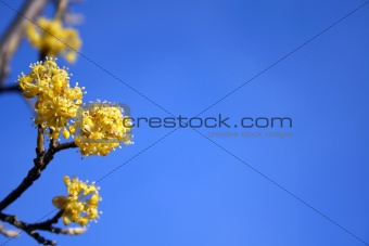 Spring flowers on a background of the sky