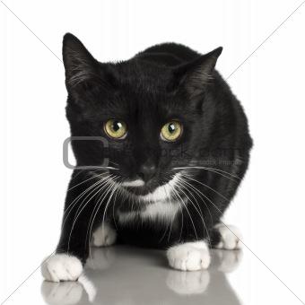 black Cat ( 10 months )