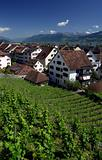 Vineyard in Rapperswil, Switzerland