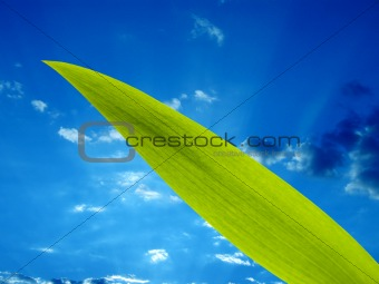 green leaf and the sky