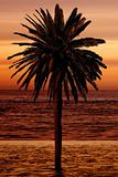 beautiful palm tree at the beach