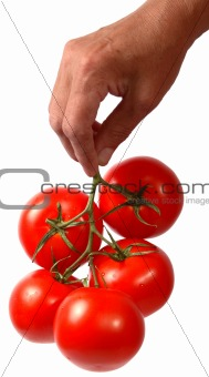 tomato_in_hand