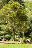 Asian garden in park.