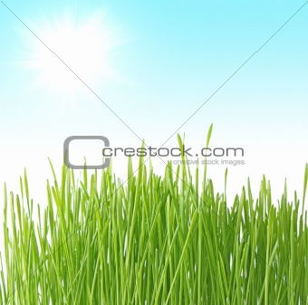 Close up of the green grass on blue background