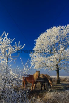 A classical winter landscape on a beautifull day in Holland