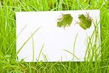 White Sign Amongst Grass with Tree Frogs